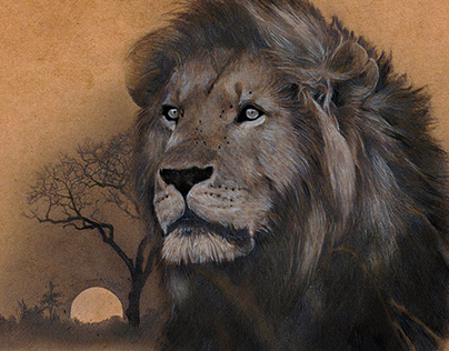 Pencil Portrait of Cecil the Lion - by Julio Lucas