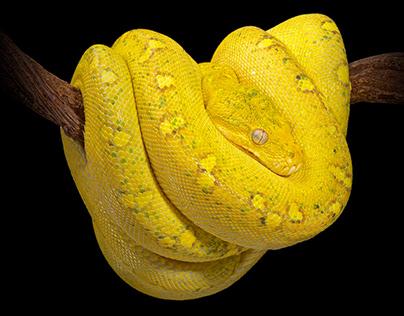COLD INSTINCT // Reptiles & Amphibians Photobook