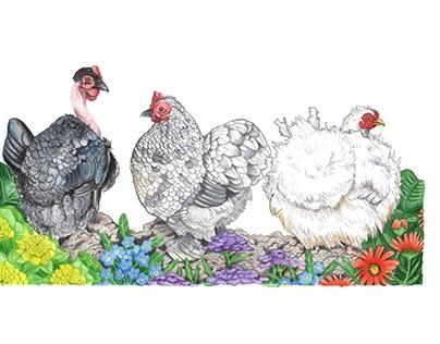 Trio of Chickens