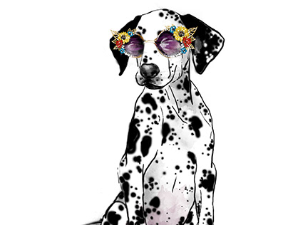 Sassy Dalmatian