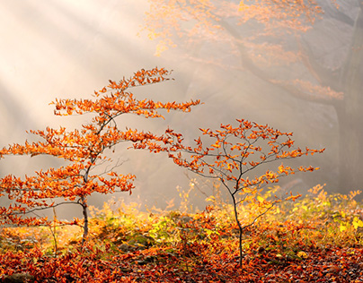 Autumn in the Ore Mountains
