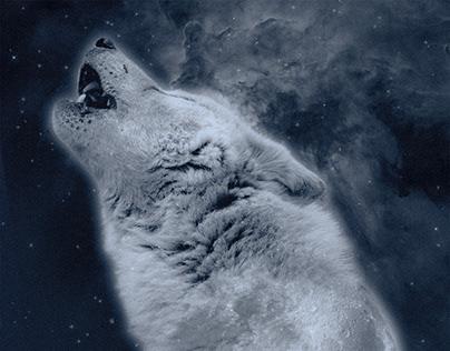 Auuuu - Attenti al lupo - Photoshop elaboration