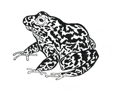 Gopher Tortoise Frog