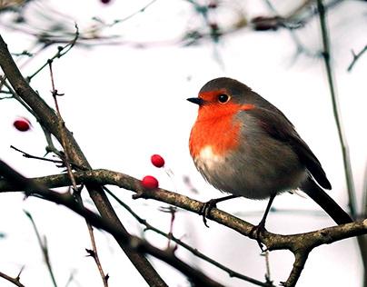 30+ Vibrant Winter Photoshop Actions