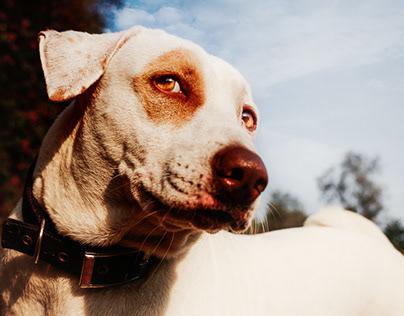 Pawtraits - Pet Photography