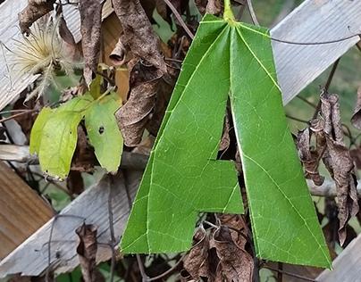 Leaf Lettering