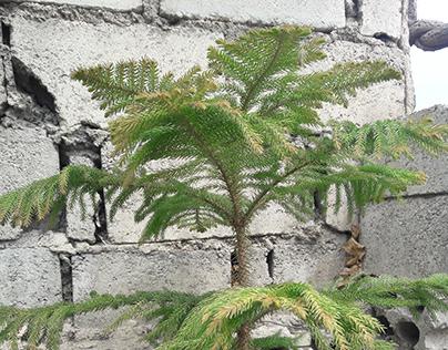 Plants Trip