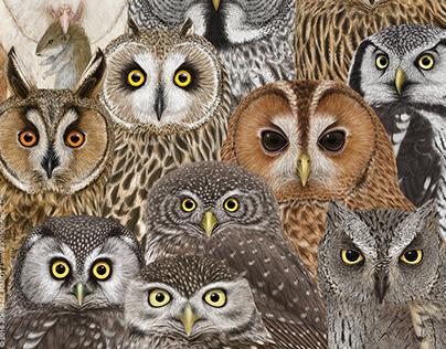 OWLS / Strigiformes