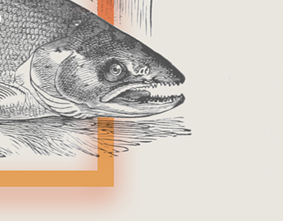 Why Aren't All Salmon Equally RED?