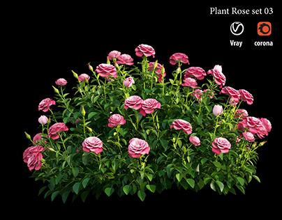 Plant rose set 03