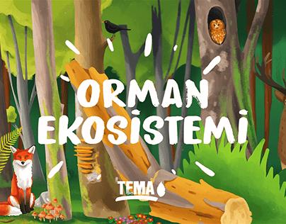 TEMA Vakfı - Orman Ekosistemi