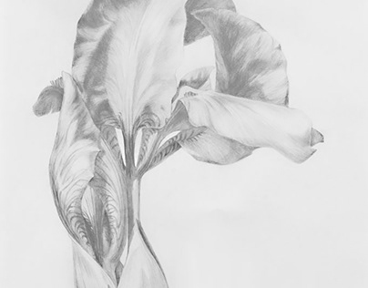PLANTS / pencil drawings
