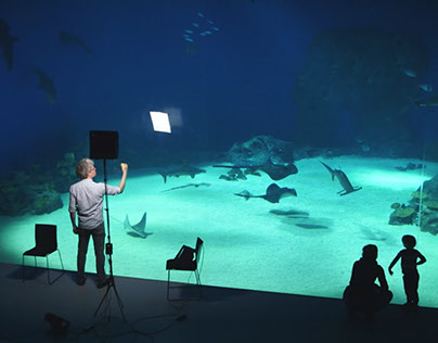 Speed drawing film on fish and plastic in the oceans