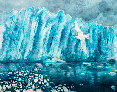 Snow petrel - Ispetrell