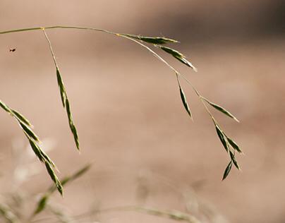 Természetfotó, Normafa // Nature Photography, Normafa