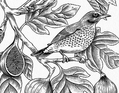 Fig tree and Fieldfare illustration