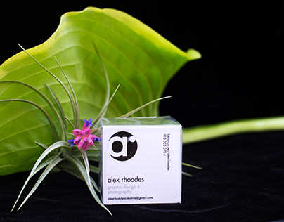 Air Plant Promo Gifts