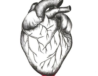 Bleeding Heart Illustration