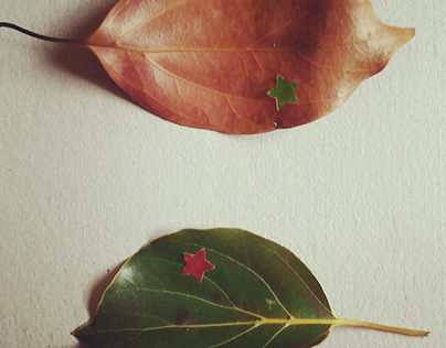 Calados botánicos