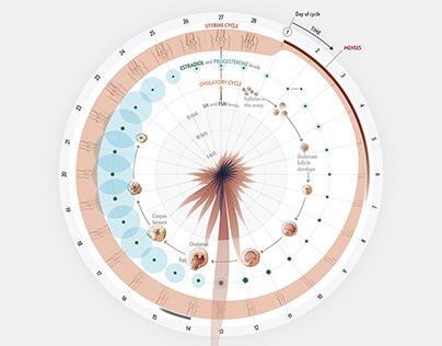 The Menstrual Cycle - Scientific American