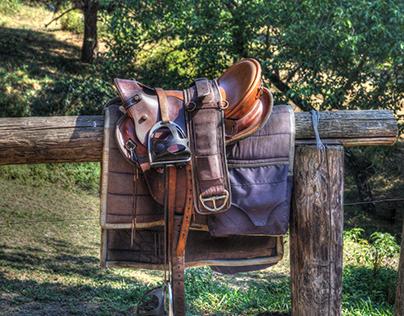 Types of Saddles