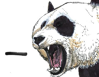 Ursidae (bear) illustrations