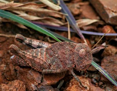 Find Me - Grasshopper