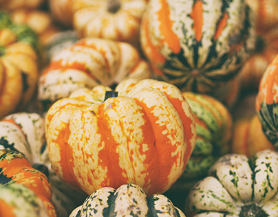 Fall Foodie Festivals