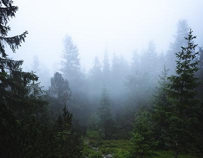 Sombre forêt 2