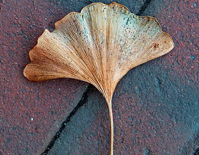 Wabi-Sabi (Leaves in Context)