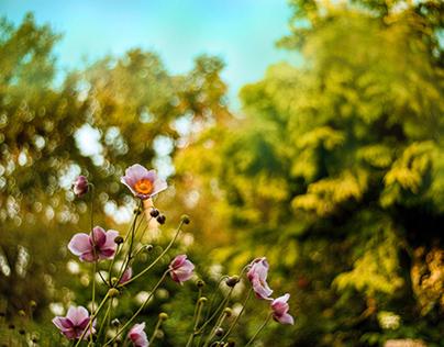 Summer-Autumn