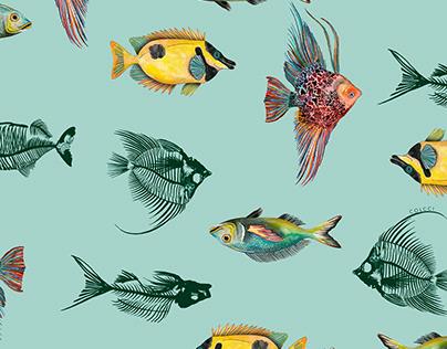 Fish Skeleton | Colcci