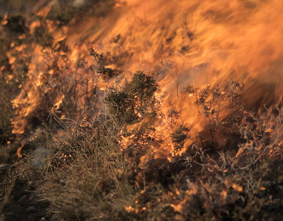 Cinzas, Ensaio Sobre o Fogo