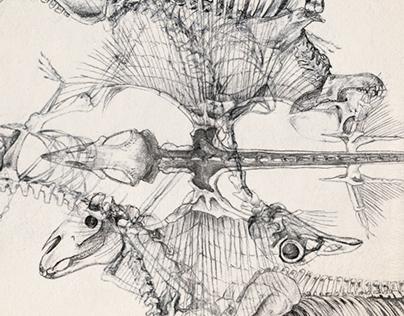Skeletons III.