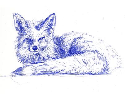 Blue ink drawings