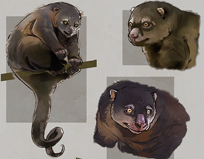 study sketches - sulawesi bear cuscus