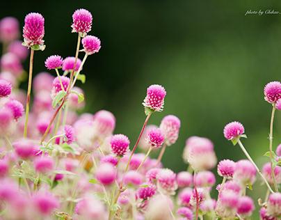 半高山と花々