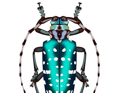 Turquoise Dot Beetle