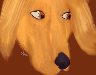 Puppy Love   Golden Retriever