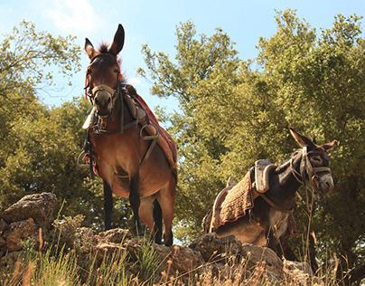 Tiere auf Kreta