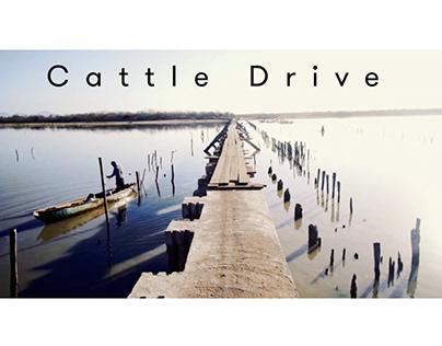 Cattle Drive. La Laguna Huizache. Sinaloa. Mexico