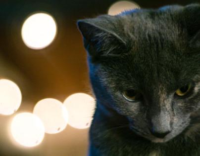 Kitten in lights
