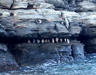 Beach creatures