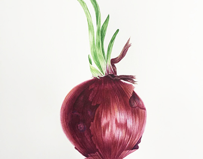 "Botanical watercolor ""Onion"""