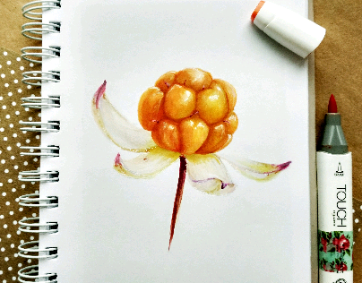 Cloudberry / морошка