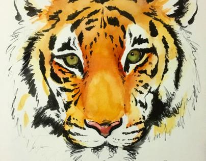 Tiger part 2