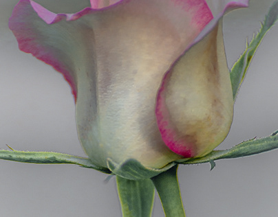 """""""A Rose in Pastel"""" (2021)"""