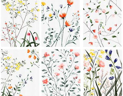 Flower illustrations/personal work