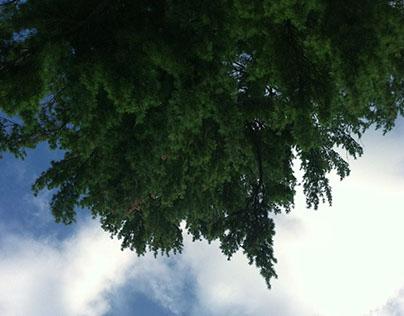 three summers at lake winnipesaukee