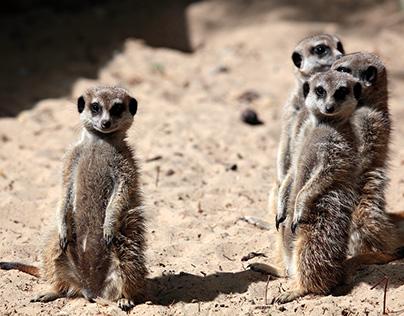 Best Zoo
